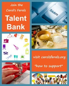 talent bank collage