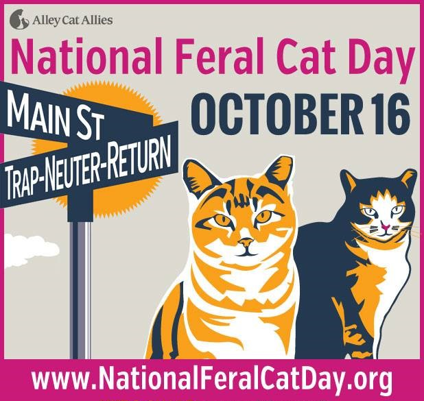national feral cat day put this on your straydar